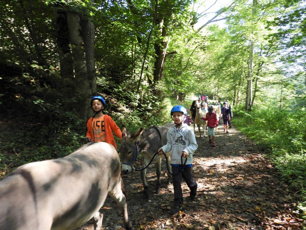 Kinderferienprogramm 2019, Auflug Kamelhof Eseltrekking