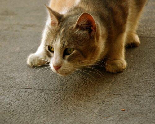 Apell zu verantwortungsbewussten Katzenhaltung durch LRA TS