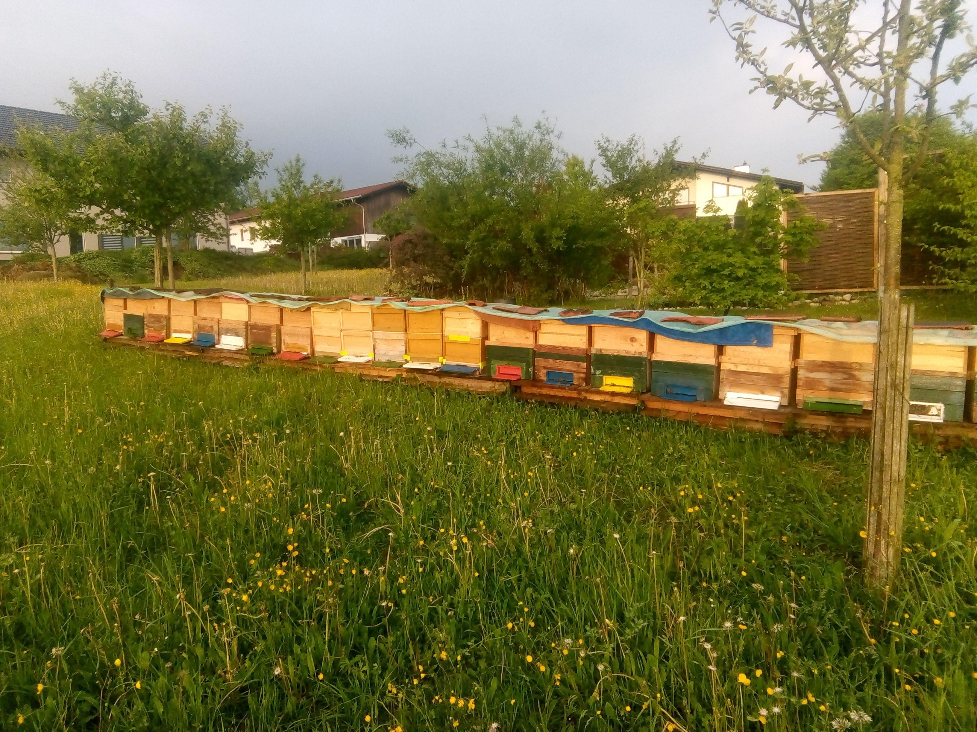 Faszination Bienenvolk
